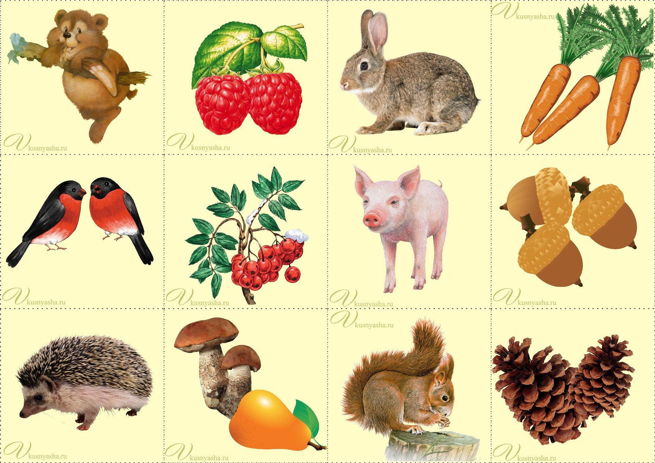Животные картинки 3 года ребенку 5